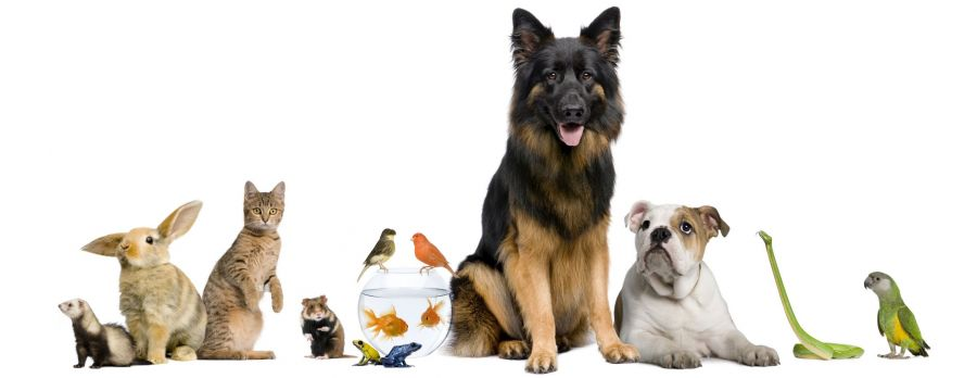 Подлежат ли возврату животные обратно в зоомагазин?