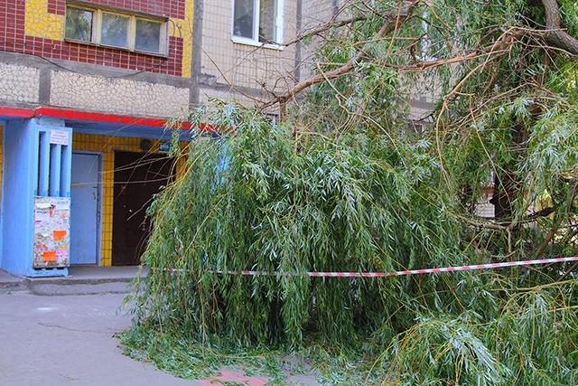 Куда обратиться, чтобы спилить дерево во дворе?